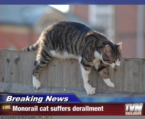 Monorail cat suffers derailment